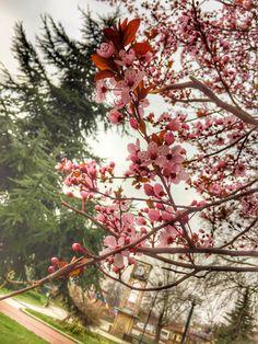 #photography #natural #anlık #doğa #botanik