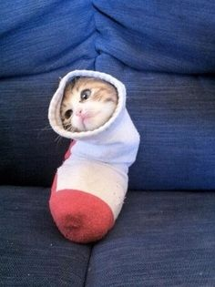 And, of course, that time that kitten got in that sock and changed the world forever. - 30 Greatest Moments in the History of Cute (via BuzzFeed)