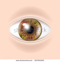 Human Eye Vector. Sight, Eyesight. Body Care. Realistic Detail Vision Illustration