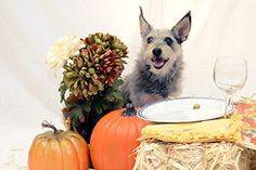 With the Holidays fast approaching, here are some tips from the ASPCA to keep your pets safe this Thanksgiving! Reminder that Holiday appointments are still available to get your dog in before Thanksgiving!