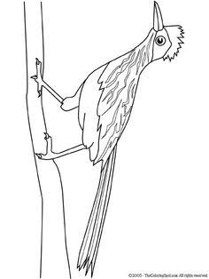 Kleurplaat  vogels roadrunner, birds