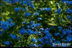 Gärten der Welt (Mai 2016) - Blumen 3 #GärtenderWelt #GardensoftheWorld #Berlin #Deutschland #Germany #biancabuergerphotography #igersgermany #igersberlin #IG_Deutschland #IG_Berlin #ig_germany #shootcamp #shootcamp_ig #Marzahn #pickmotion #berlinbreeze #diewocheaufinstagram #berlingram #visit_berlin  #AOV5k #canon #canondeutschland #EOS5DMarkIII #5Diii #blume #flower #blumen #flowers