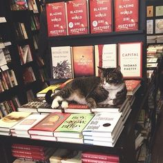Give them a head start… | An Ode To Bookstore Cats