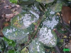 Remedios ecológicos contra los hongos de las plantas