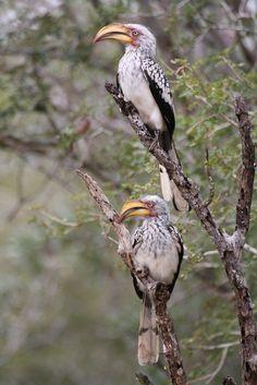 Kruger National Park. BelAfrique your personal travel planner - www.BelAfrique.com
