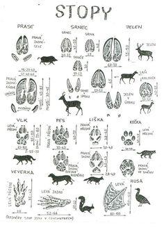 Výsledek obrázku pro stopy zvířat v lese