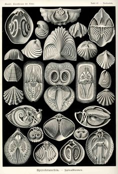 """Prints and Principles: Haeckel: 10 """"Rules"""" of Composition (Part 1)"""