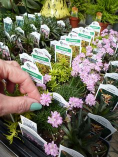 Create nameplates for plants and let kids get their hands dirty with these perennials for fairy gardening. Shop garden markers http://www.kincaidplantmarkers.com/.