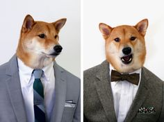 Menswear Dog for The Tie Ba