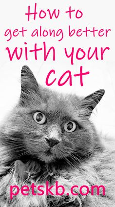 If you fell your friendship with your cat is a little strained, fret not, this is the guide for you! We've created 10 straightforward ways to get you relationship with your feline friend back on track. You may not be committing all of these mstakes but one or two might prick your conscience. Take a look and see. Information About Cats, Cat Info, Vinegar Detox Drink, Cat Crying, Cat Diet, Cat Attack, Owning A Cat, Cat Behavior, Cat Facts