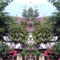 Veröffentlicht August 2020 ©ChrisTina Maywald Plants, Mirror Image, Life, Pictures, Plant, Planets