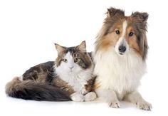 Cachorro ou gato: qual é o melhor para você?
