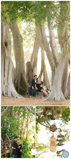 Sarasota Engagement Session at Selby Gardens sarasota- lovely locations for portraits