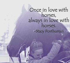 328 Best Horse Rider Sayings Images Horse Quotes Equestrian