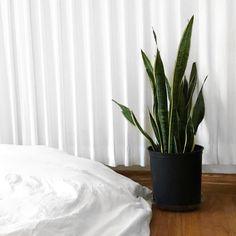 10 plantes d'intérieur faciles d'entretien et quasi intuables