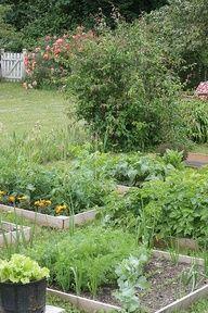 Vegetable garden gardens-and-plants