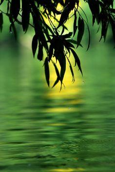 Green serenity - �©Tomo Jesenicnik