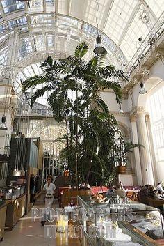Das Palmenhaus,Viena. En 1998, la Casa de las Palmeras pudo ser reabierto. La parte central es utilizado por un establecimiento de hostelería, el ala izquierda se encuentra la casa de la mariposa , el ala derecha es de los jardines Federales Austríacos utilizados como un invernadero.