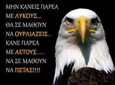 Fly Free like an eagle. Greek Quotes, Bald Eagle, Wise Words, Inspirational Quotes, Pictures, Google, Notes, Sky, Dreams