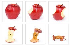 Sequential images of the apple, Home Activities Preschool Science Activities, Fun Activities For Toddlers, Pre K Activities, Fall Preschool, Sequencing Activities, Science Activities For Kids, Preschool Worksheets, Preschool Activities, Kindergarten Science