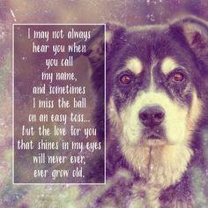Celebrating Senior Dogs during Adopt a Senior Dog Month!