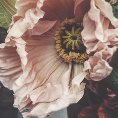Gorgeous photos of floral arrangements to inspire you. Inspiration for your new floral tattoo to pretty floral backgrounds for your phone. Exotic Flowers, Pink Flowers, Beautiful Flowers, Fresh Flowers Online, Floral Photography, Arte Floral, Flower Delivery, Flower Art, Planting Flowers