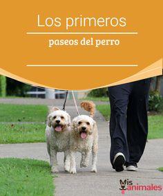 Los primeros paseos del perro - Mis animales  A los perros hay que vacunarlos y educarlos antes de sacarlos a la calle por primera vez. Aquí te explicamos cómo gestionar los primeros paseos del perro.