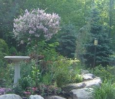 Lilac topiary and stone path