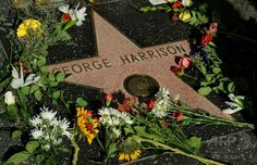 米ロサンゼルス(Los Angels)のハリウッドの殿堂(Hollywood Walk of Fame)通りにある元ビートルズ(The Beatles)の故ジョージ・ハリソン(George Harrison)さんのプレート(2009年11月29日撮影)。(c)AFP/Mark RALSTON ▼23Jul2014AFP ジョージ・ハリスンさんの記念樹、「ビートル」被害で枯れる http://www.afpbb.com/articles/-/3021286