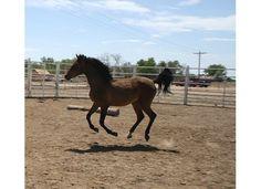 Dream Catchers Equine Rescue Candice Ensign askcandice on Pinterest 8