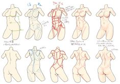 Drawing Female Body, Body Reference Drawing, Art Reference Poses, Anatomy Reference, Anatomy Sketches, Anatomy Art, Anatomy Drawing, Figure Drawing Tutorial, Manga Drawing Tutorials