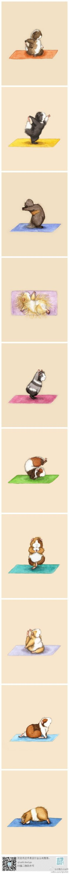 Guinea pig and yoga illustration from duitang