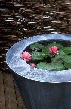 Container Water Garden with Water Lily.some in the old horse tank would be gre. >> Find out more at the picture Small Water Gardens, Container Water Gardens, Container Gardening, Backyard Water Feature, Ponds Backyard, Backyard Ideas, Garden Ideas, Water Features In The Garden, Plantation