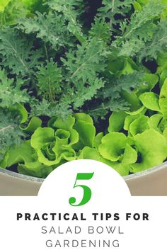 Plant spinach and salad greens in a flower pot for easy growing!