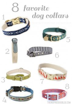 The Inspired Dog's 8 Favorite Dog Collars (For the Modern Pup)