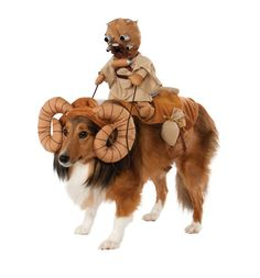 Dogs Halloween Costumes.  Star Wars Dog Halloween costume makes a great costume for large dogs.  So adorable!