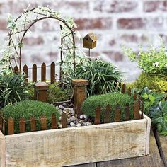 A simple white washed box transformed into a lush container landscape makes for a beautiful home to this miniature garden.