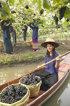 ~*Siam Winery Floating Vineyards, Chao Phraya Delta, Thailand   Palee Wong Trading