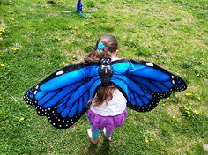 Blue Morpho Butterfly Wings!