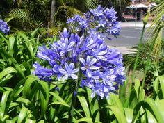Las plantas y árboles más bonitos de Tenerife