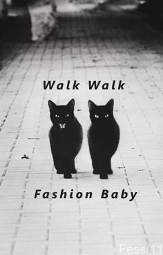 walk walk//