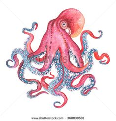 Watercolor illustration Octopus. - Shutterstock Premier