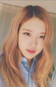 Your source of news on YG's biggest girl group, BLACKPINK! 1 Rose, Love Rose, South Korean Girls, Korean Girl Groups, Black Pink Kpop, Rose Bonbon, Blackpink Members, Rose Park, Blackpink Photos