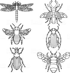 Set of beetle illustrations isolated on white background. royalty-free set of beetle illustrations isolated on white background stock vector art & more images of insect Flash Art Tattoos, Animal Drawings, Art Drawings, Beetle Drawing, Beetle Tattoo, Broderie Simple, Insect Art, Bug Insect, Embroidery Patterns Free