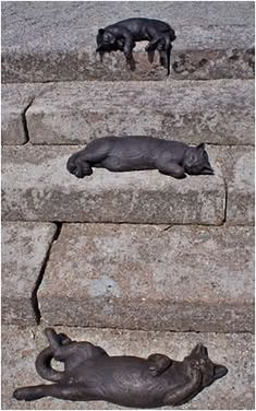 "Sculpture ""Cats on the steps"", Delamore House, UK (Delamore House is the former estate of Admiral Parker, one of the captains of the armada of Nelson in the Battle of Trafalgar) ~ Crazy Cat Lady Decor ~"