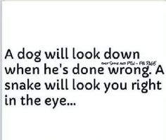 A dog will look down when he's done wrong. A snake  will look you right in the eye...