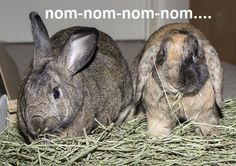 Repin and visit http://smallpetselect.com to get a free sample of high quality timothy hay  for rabbits!  This is fresh, high quality  timothy hay delivered straight to your door...and rabbits absolutely love it!  Please repin and share with your friends, the free sample offer will only be available for a limited time.  Have a great weekend!