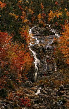 Silver Cascade in Crawford Notch State Park, New Hampshire Silver Cascade Fine Art Print - Tamara Brown