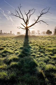 This photographer has taken photos of the same old, dead tree over & over again in all types of varying weather and light.  It is beautiful!