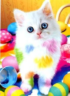 """""""What? I was helping dye the Easter eggs!"""""""